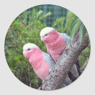 Pink Cockatoos Classic Round Sticker