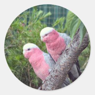 Pink Cockatoos Classic Round Sticker