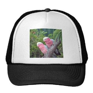 Pink Cockatoos Trucker Hat
