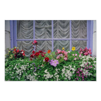 Pink Colorful flowerbox flowers Poster