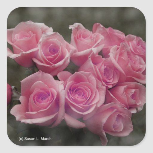 pink colorized rose bouquet Spotted background Square Sticker