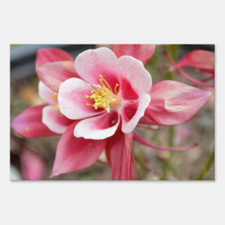 Pink Columbine Lawn Sign