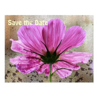 Pink Comos Flower Postcard