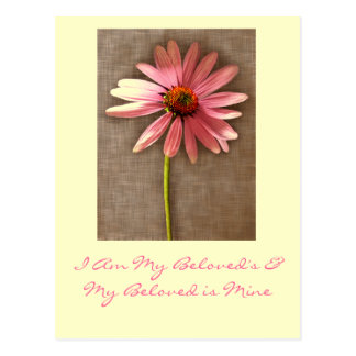 Pink Cone Flower -I am My Beloved's and My Beloved Postcard