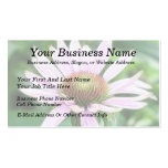 Pink Coneflower - Echinacea Purpurea Business Card Templates