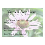 Pink Coneflower - Echinacea Purpurea Business Cards