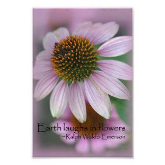 Pink coneflower macro photography print nature art photo art
