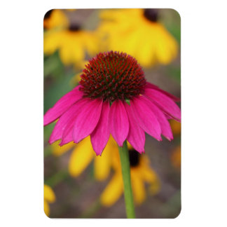 Pink Coneflower Rectangle Magnet