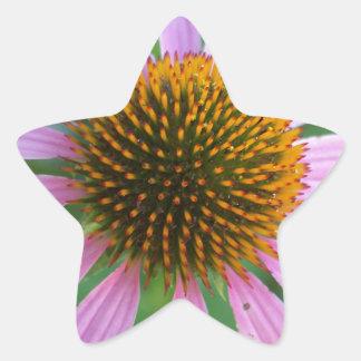 Pink Coneflower Star Sticker