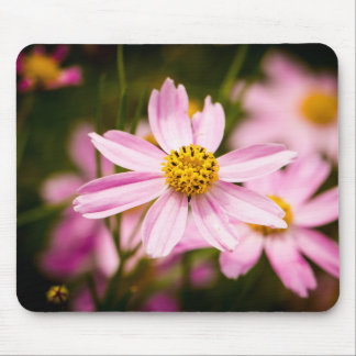 Pink Coneflowers Mouse Pad
