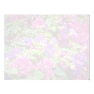 Pink Convolvas and bougainvillea, Spaincon flowers Letterhead