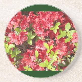 Pink Coral Azaleas Coaster