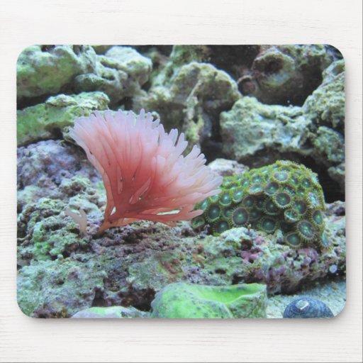 Pink coral in saltwater aquarium mousepad