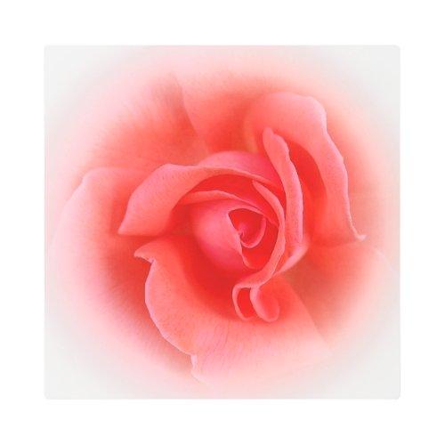 pink coral rose metal print - Pink wall art