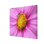 Pink Cosmos and Bee Pretty Wildflower Canvas Print