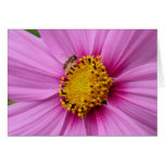 Pink Cosmos and Bee Pretty Wildflower Card