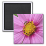 Pink Cosmos and Bee Pretty Wildflower Magnet