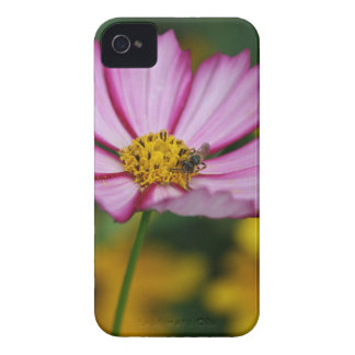Pink Cosmos and Black Eyed Susans iPhone 4 Case-Mate Cases
