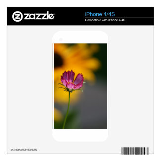 Pink Cosmos and Black Eyed Susans iPhone 4 Skins