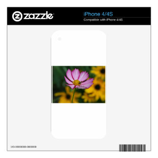 Pink Cosmos and Black Eyed Susans iPhone 4S Skin