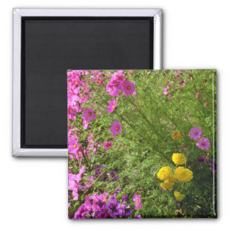 Pink Cosmos And Yellow Mums flowers Magnet