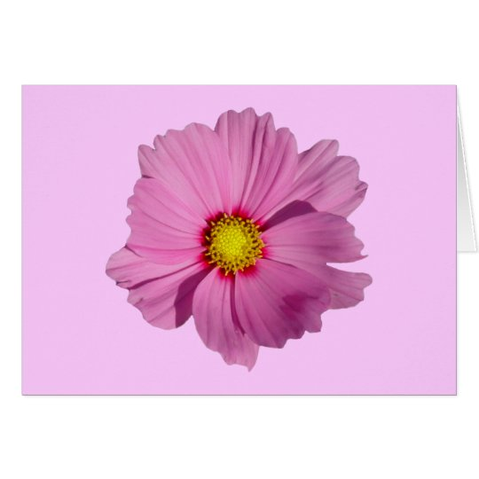 Pink Cosmos Card