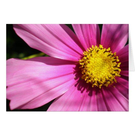 Pink Cosmos Flower Card