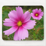 Pink Cosmos Flowers Mouse Pad