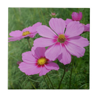 Pink Cosmos Flowers Nature Tile