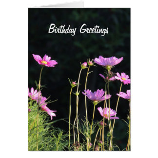Pink Cosmos in the Morning Sun Card