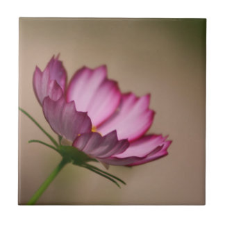 Pink cosmos picote Blossom Tile