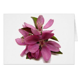 Pink Crab-apple (?) Blossoms card