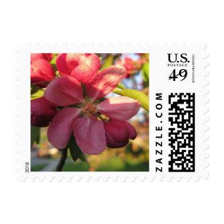 Pink Crab Apple Tree Flower Postage