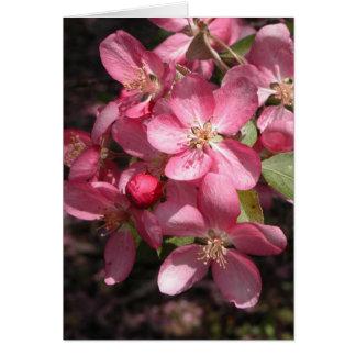 Pink Crabapple Greeting Card