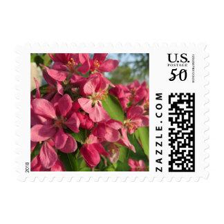Pink Crabapple Tree Flowers Postage