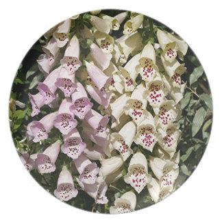 Pink & cream foxglove flowers melamine plate