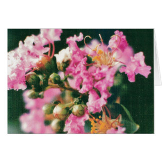 Pink Crepe Myrtle Greeting Card
