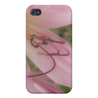 Pink Crinum Lilies 1 Cases For iPhone 4