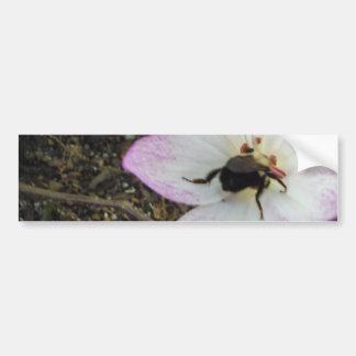 Pink Crocus with Bumblebee Bumper Sticker