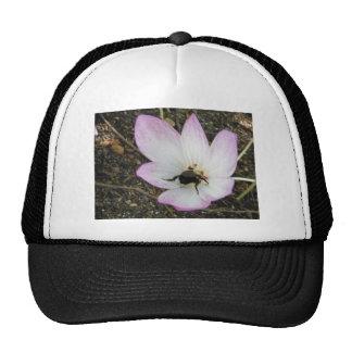 Pink Crocus with Bumblebee Mesh Hats
