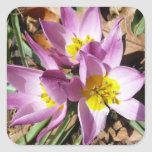 Pink Crocuses Early Spring Floral Square Sticker
