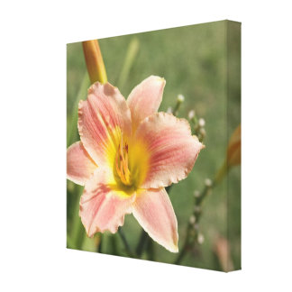 Pink Cultivated Daylily - Macro Closeup View Canvas Print