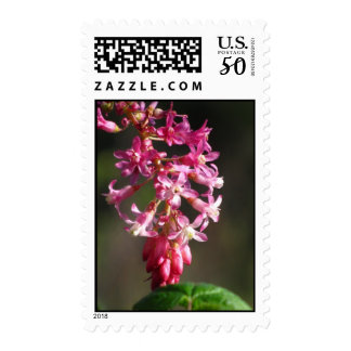 Pink Current Wildflower Postage