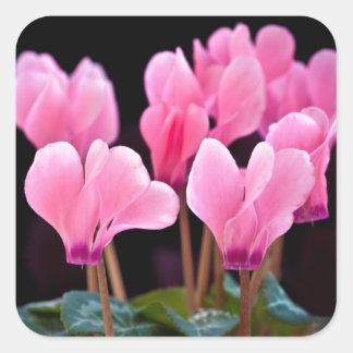 Pink Cyclamen Square Sticker