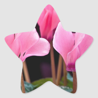 Pink Cyclamen Sticker