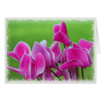 Pink Cyclamens Card