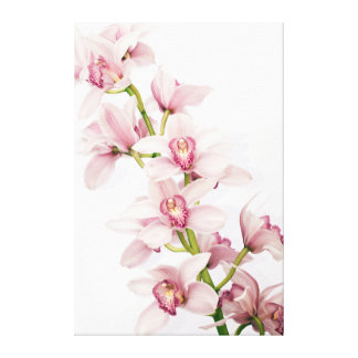 Pink Cymbidium Orchid Flower Wrapped Canvas Print