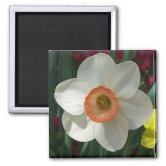 Pink Daffodil Beautiful Spring Flower 2 Inch Square Magnet