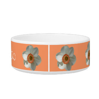 Pink Daffodil Beautiful Spring Flower Bowl
