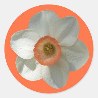 Pink Daffodil Beautiful Spring Flower Classic Round Sticker